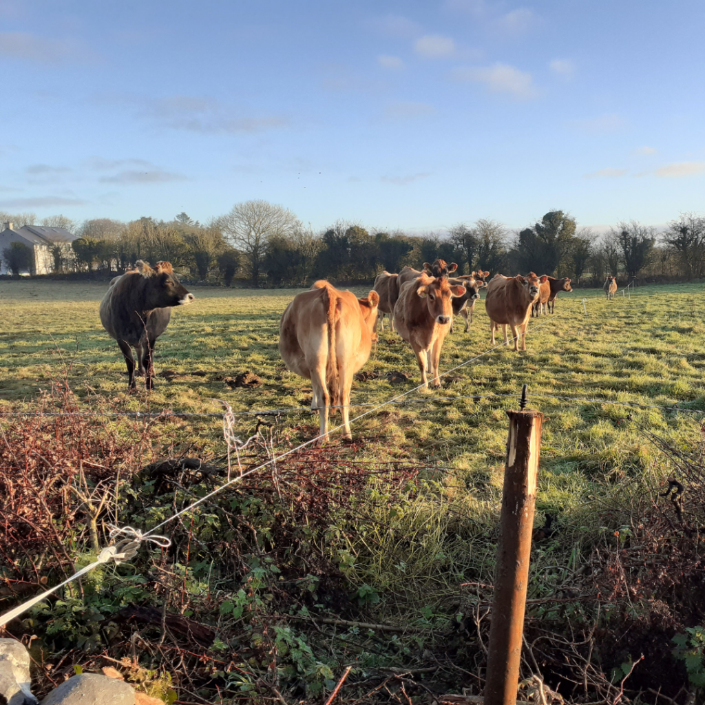 Whats Happening on the Farm - Friendly Farmer - Winter Grazing